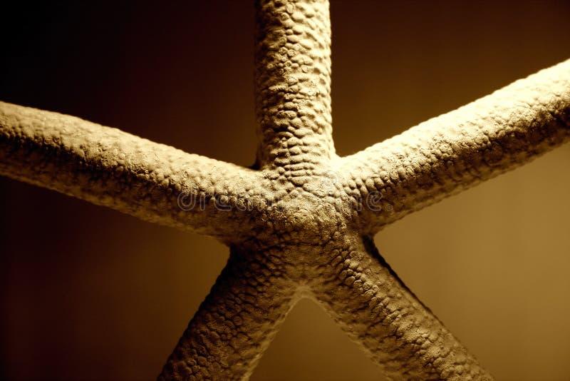 Download Tät sjöstjärna upp fotografering för bildbyråer. Bild av close - 26281