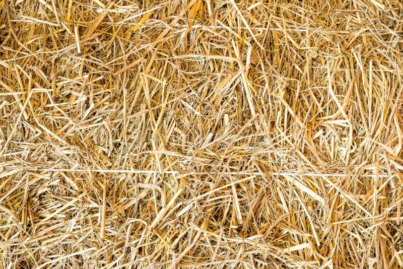 Download Tät sugrörtextur upp sikt fotografering för bildbyråer. Bild av gräs - 78729453