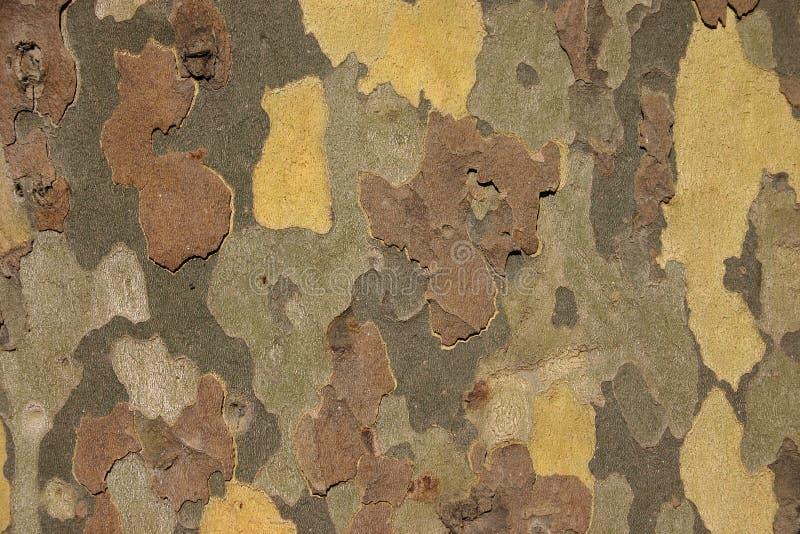 Download Tät tree upp arkivfoto. Bild av textur, tree, medf8ort, fall - 37306