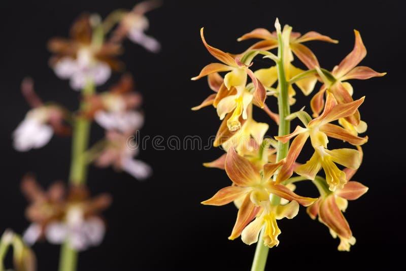 täta blommor up yellow royaltyfri fotografi