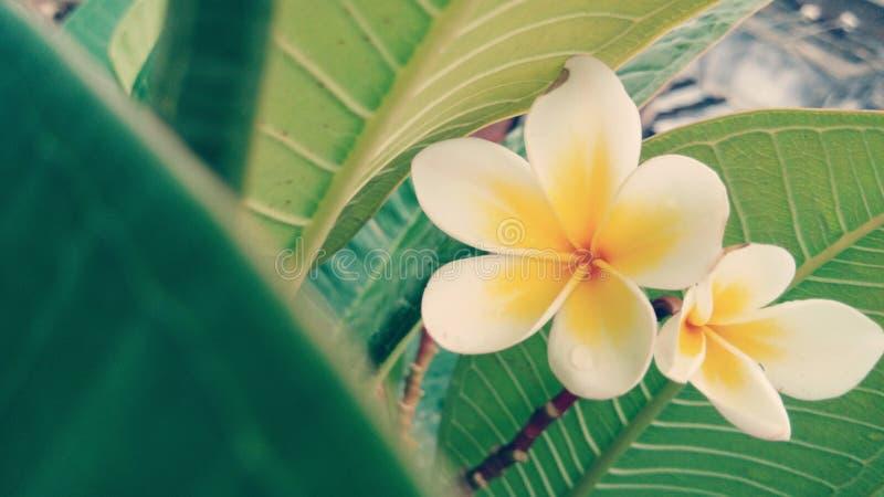 täta blommor upp arkivfoto
