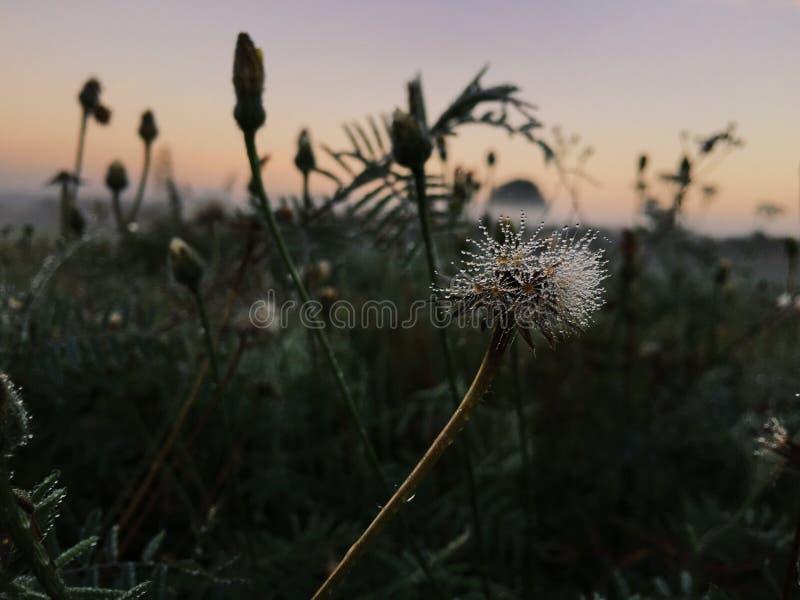 täta daggliten droppe gräs perfekt övre vatten för leafmorgonen fotografering för bildbyråer