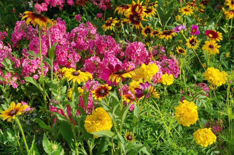 täta färgblommor arbeta i trädgården upp ljus naturlig fotosommar arkivbilder
