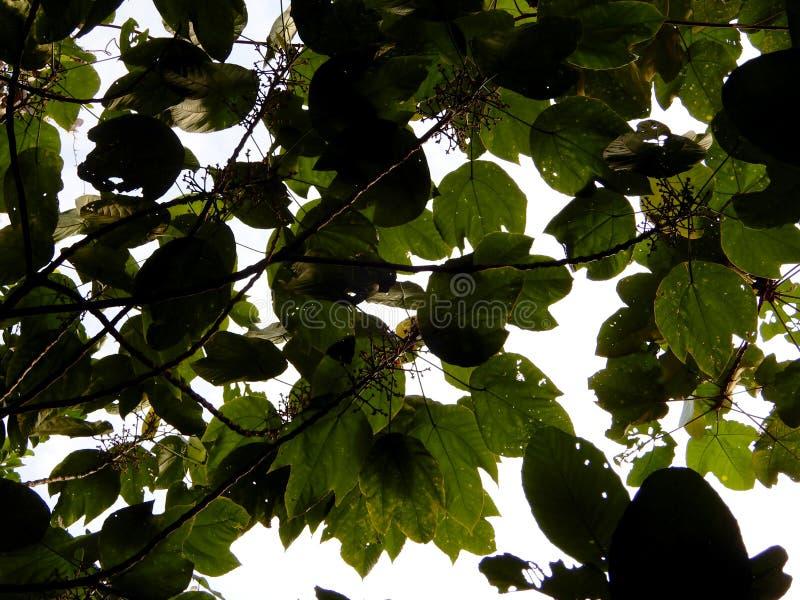 Täta träd i skogen royaltyfria foton