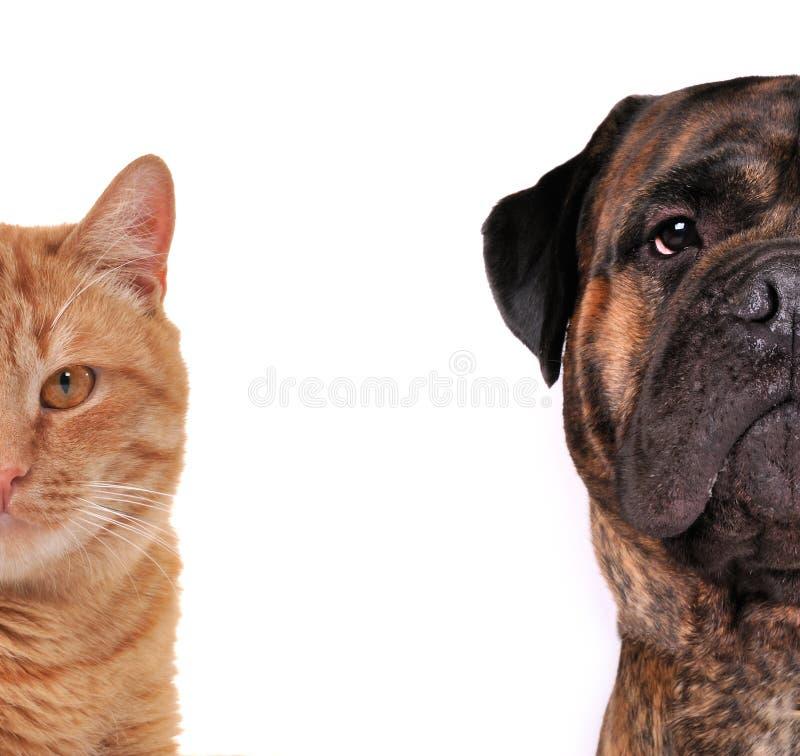 täta tystar ned den isolerade hundhälften för katten upp royaltyfri foto