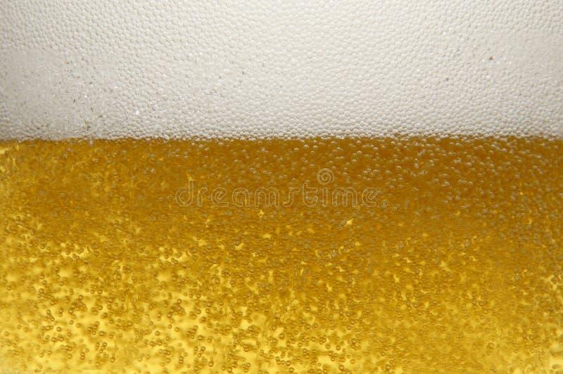 tätt övre för öl royaltyfria bilder