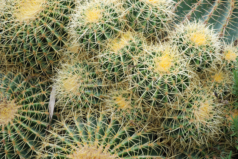 tätt övre för kaktus royaltyfri foto