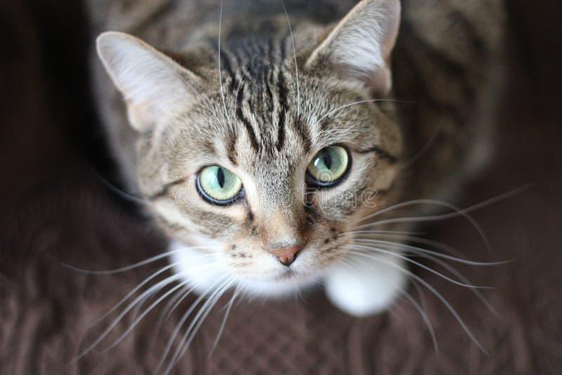 Tätt övre För Katt Gratis Allmän Egendom Cc0 Bild