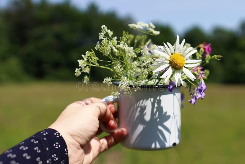 Tätt av kvinnans hand som rymmer metall, råna upp buketten för lösa blommor Utomhus- koppla av tid Vit emaljkopp med tusenskönor, royaltyfri foto