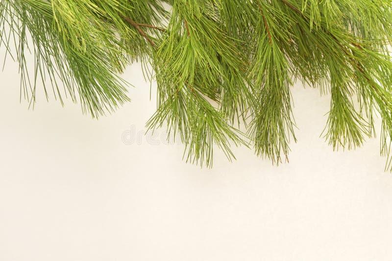 Tätt av sörja upp visare eller lövruskor, på vit med massor av rum för typ eller kopian eller en hälsning arkivfoto