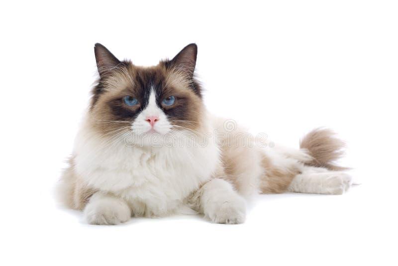 tätt gulligt övre för katt arkivbild