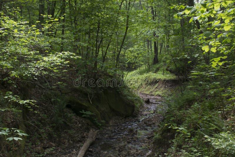 Tätt skoglandskap med strömmen arkivbilder