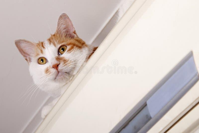 tätt styggt övre för katt royaltyfria bilder