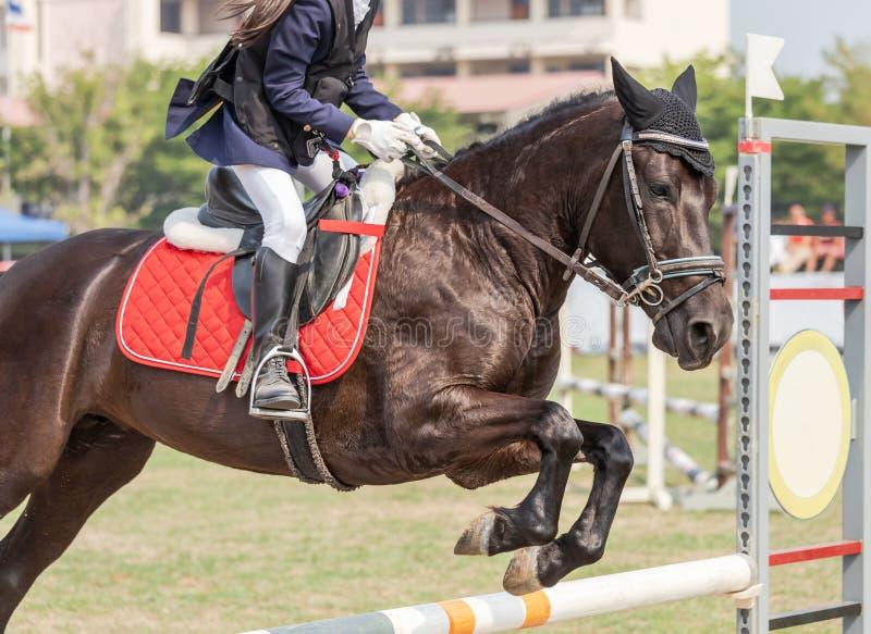 Tätt upp att åtgärda den rid- ryttarehästen som hoppar över häckhinder under dressyrprovkonkurrens royaltyfri foto