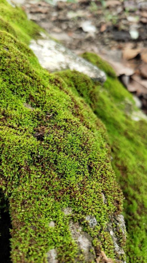 Tätt upp, grön mossa på tegelstenen royaltyfri foto