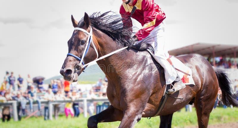 Tävlings- häststående i handling arkivbild