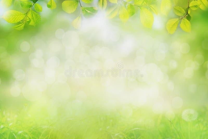 tła natury przestrzeni wiosna tekst twój zdjęcie stock