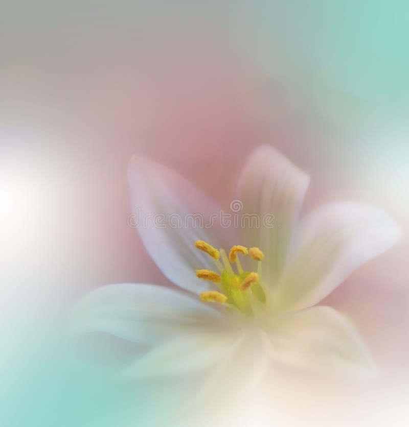 tło natura piękna zielona Fantazja projekt Artystyczni abstraktów kwiaty Sztuki fotografia Wiosna, lato, kreatywnie magia zaprosz obraz stock