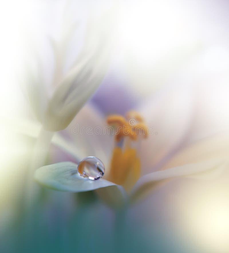 tło natura piękna zielona kosmos kopii projekt artystyczna podstawowa tapeta Naturalna Makro- fotografia Wiosna, biali kwiaty Kwi obraz stock