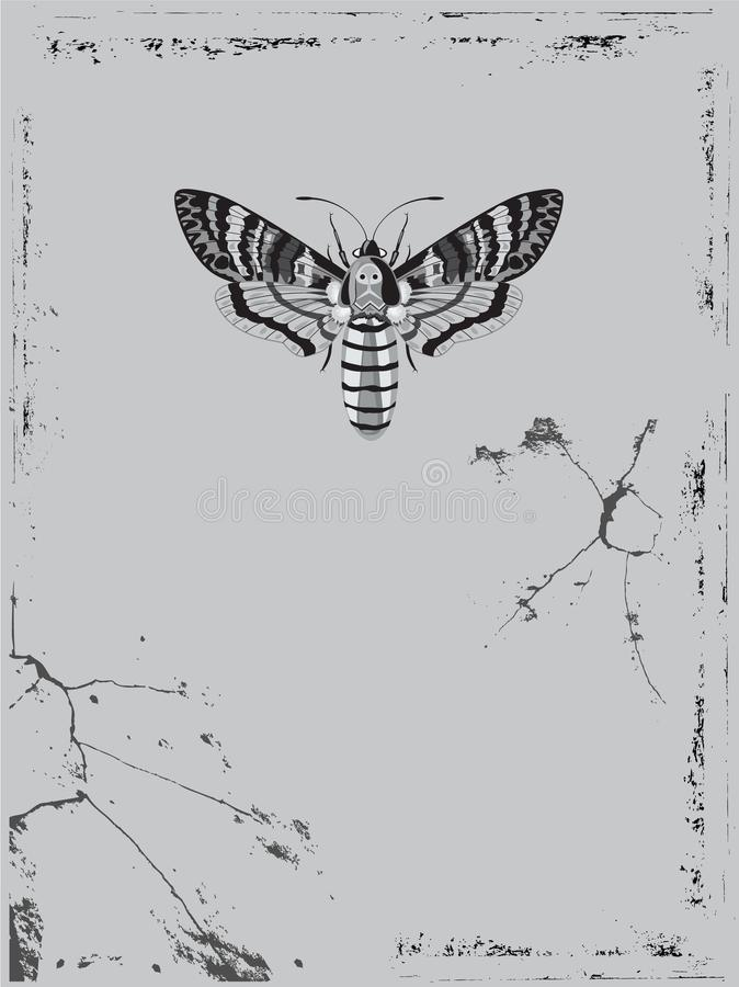 Tło z motylim śmiertelnej głowy jastrzębiem ilustracji