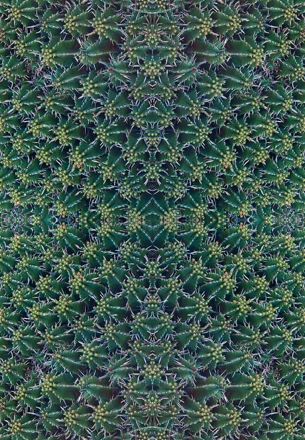 Tłustoszowaty roślina wzór obraz stock
