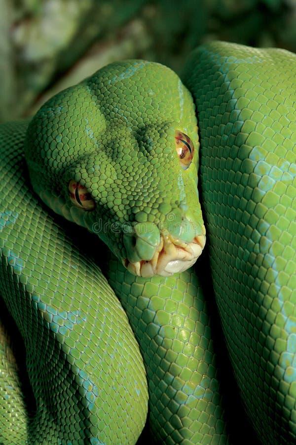 Tålmodig rovdjur fotografering för bildbyråer