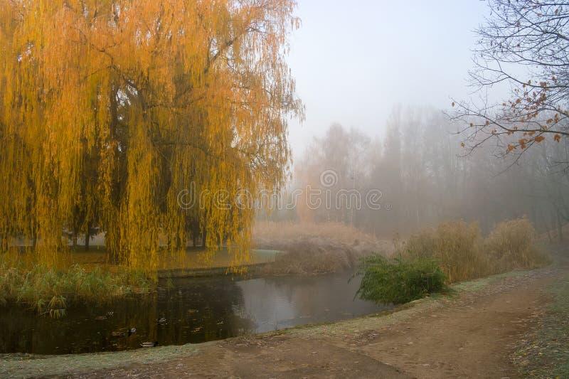 Tårpilträdet över dammet i höst parkerar Dimmig dimmig höstdag royaltyfria bilder