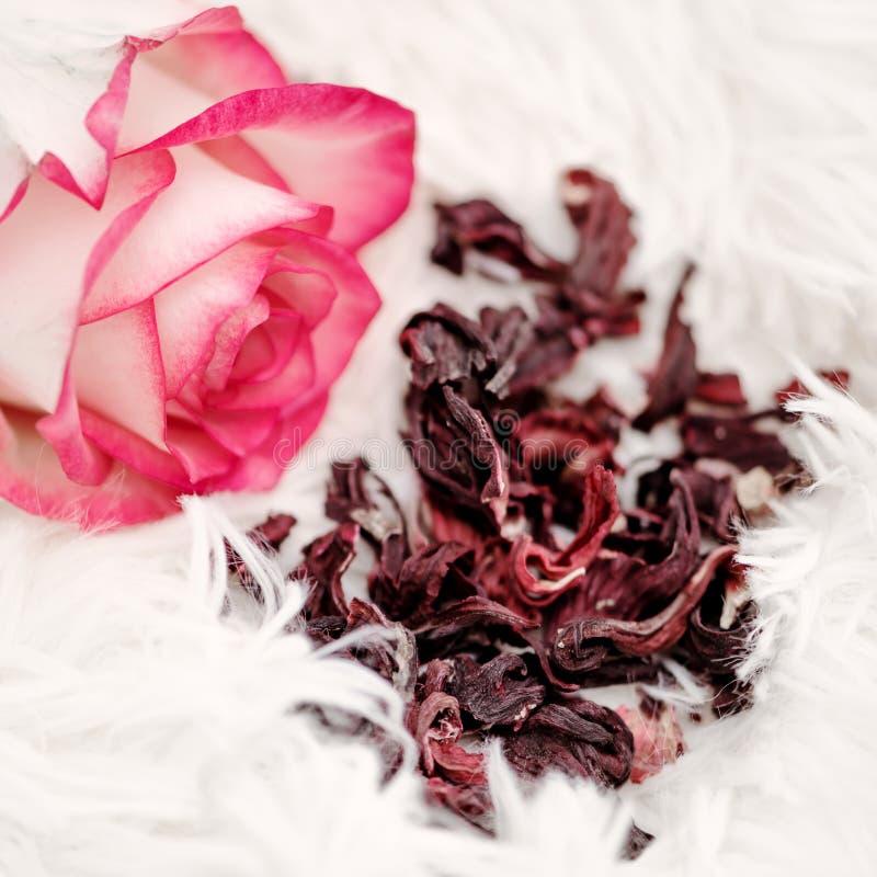 Tè asciutto dell'ibisco e una rosa rosa vivace fotografia stock libera da diritti