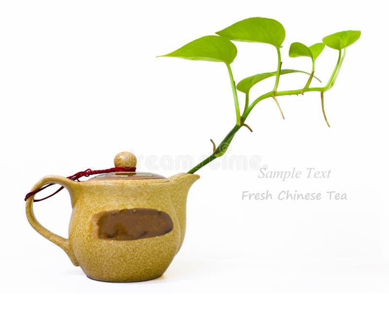 Tè cinese fresco con la teiera e le foglie verdi fotografia stock