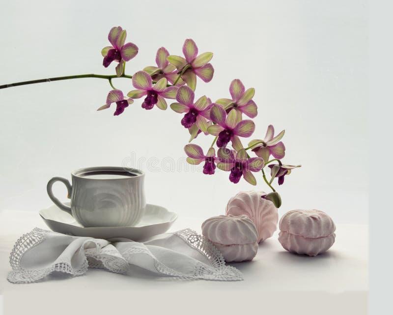 Download Tè Con Le Caramelle Gommosa E Molle E L'orchidea Immagine Stock - Immagine di marshmallows, ancora: 56889041