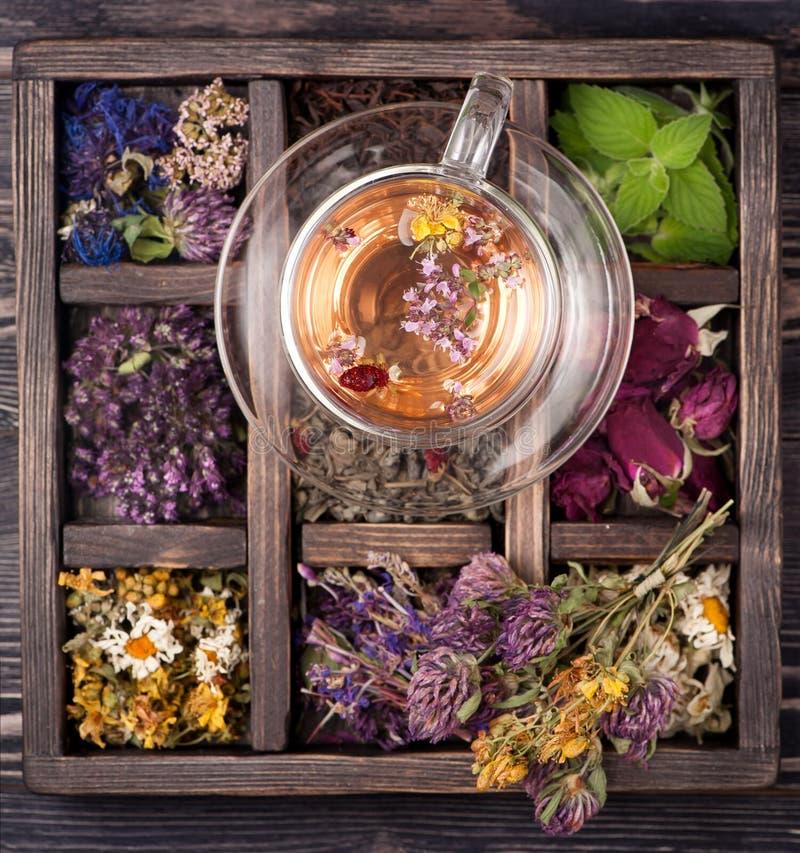 Tè con le erbe, fiori e bacche ed erbe secche in una scatola di legno immagine stock libera da diritti
