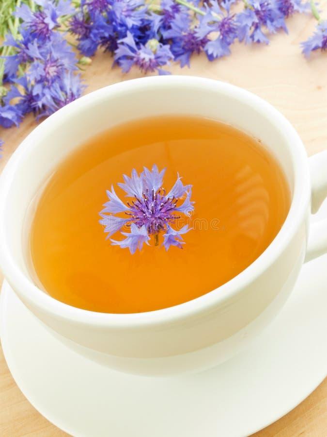 Tè del Cornflower immagine stock