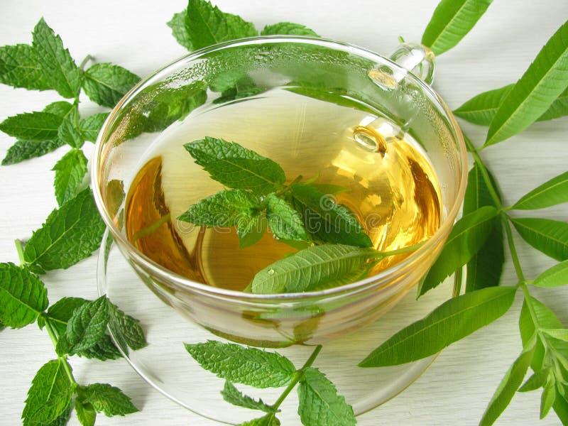 Tè di erbe con la verbena del limone e la menta marocchina immagini stock libere da diritti