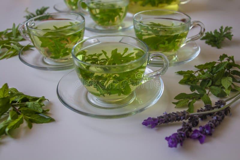 Tè di erbe fresco organico sano: Menta verde, verbena del limone e salvia fotografia stock
