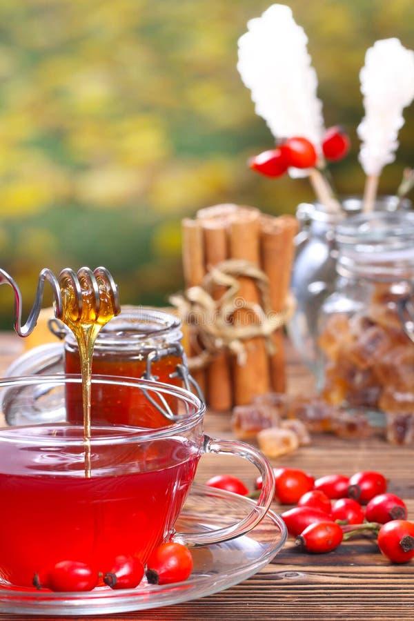 Tè dolce del cinorrodonte con miele fotografia stock libera da diritti