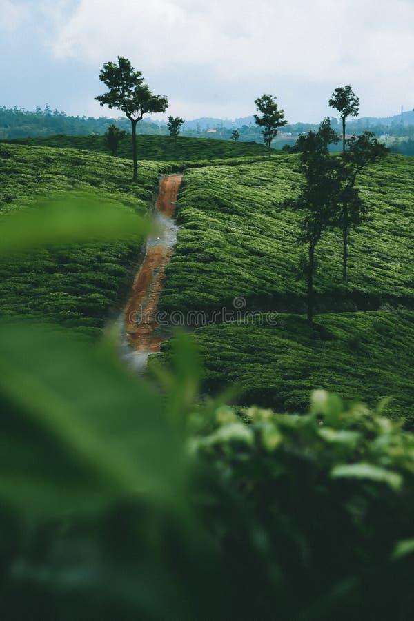 Tè e più tè fotografie stock