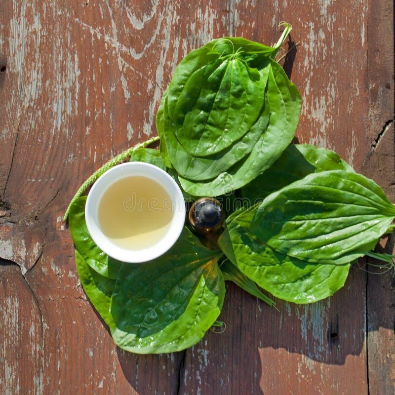 Tè e tintura di erbe dalle foglie del plantano sulla tavola di legno fotografia stock