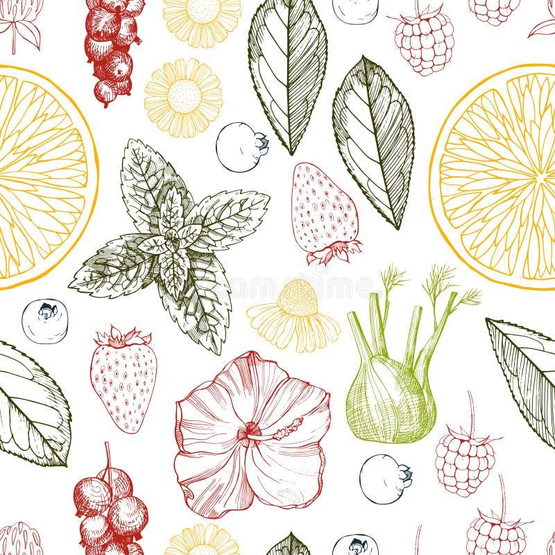 tè selettivo naturopathy di infusione di erbe di vetro del horsetail del fuoco del equisetum della tazza del arvense Vector il re illustrazione di stock