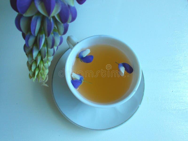 Tè in una tazza bianca con i fiori blu del lupino, fondo blu immagine stock