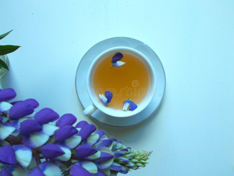 Tè in una tazza bianca con i fiori blu del lupino, fondo blu fotografia stock