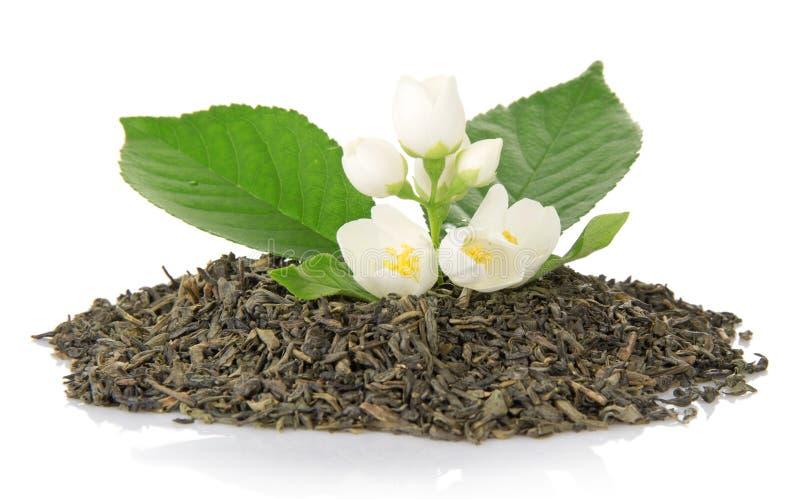 Tè verde con la foglia ed i fiori del gelsomino fotografie stock
