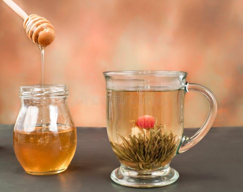 Tè verde del fiore fotografia stock libera da diritti
