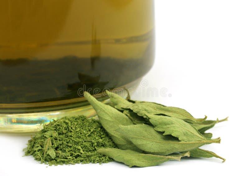 Té con las hojas dired del Stevia imagen de archivo libre de regalías