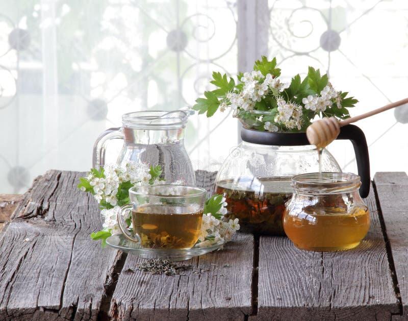 Té verde en una taza de cristal, miel y una rama de un espino floreciente imagen de archivo libre de regalías