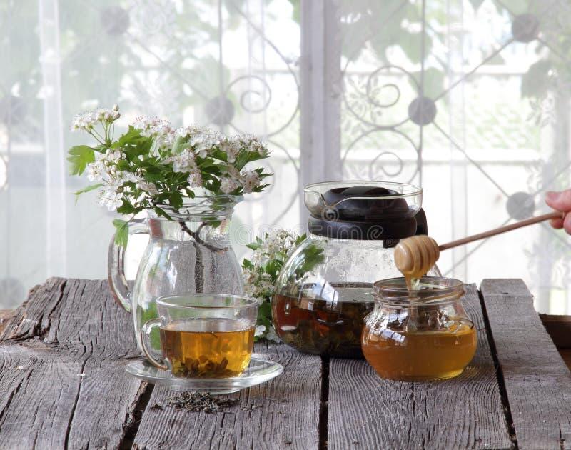 Té verde en una taza transparente, miel en un tarro de cristal y un branc fotografía de archivo libre de regalías