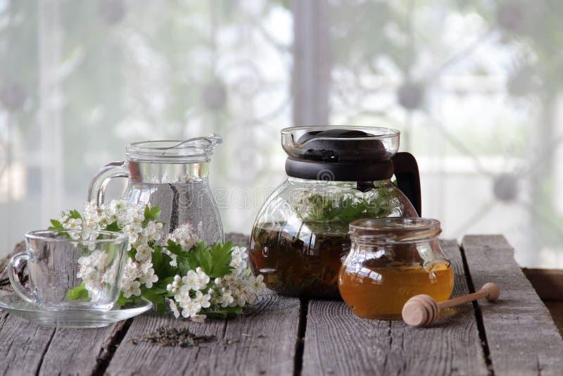 Té verde en una tetera y una miel de cristal y una rama de un blossomi imagenes de archivo