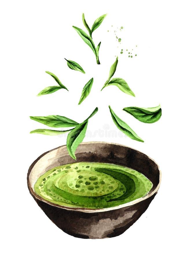 Té verde orgánico de Matcha con las hojas de té verdes que caen Ejemplo dibujado mano de la acuarela, aislado en el fondo blanco libre illustration