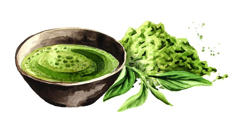 Té verde orgánico de Matcha con las hojas de té y el polvo verdes del matcha Ejemplo dibujado mano de la acuarela stock de ilustración