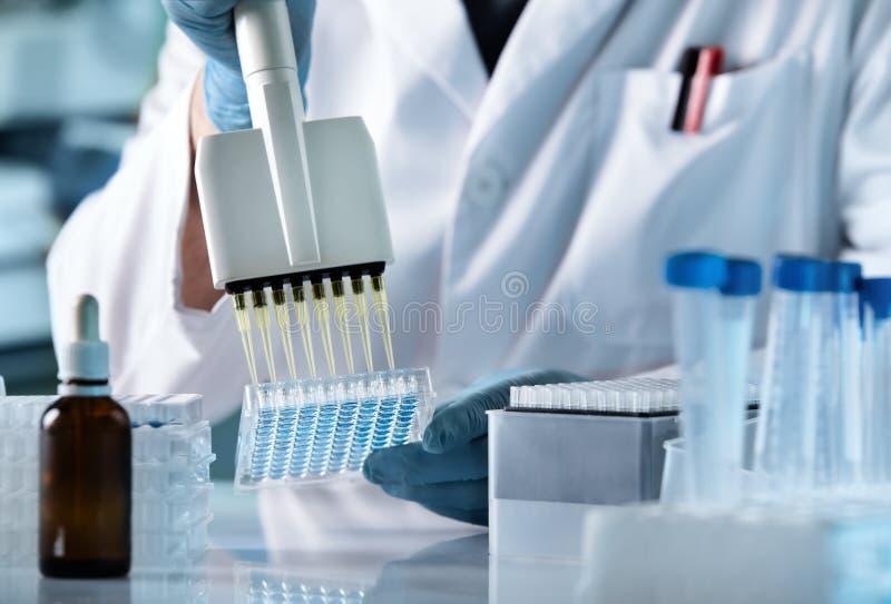 Técnico de la investigación con multipipette en laboratorio genético imagen de archivo libre de regalías