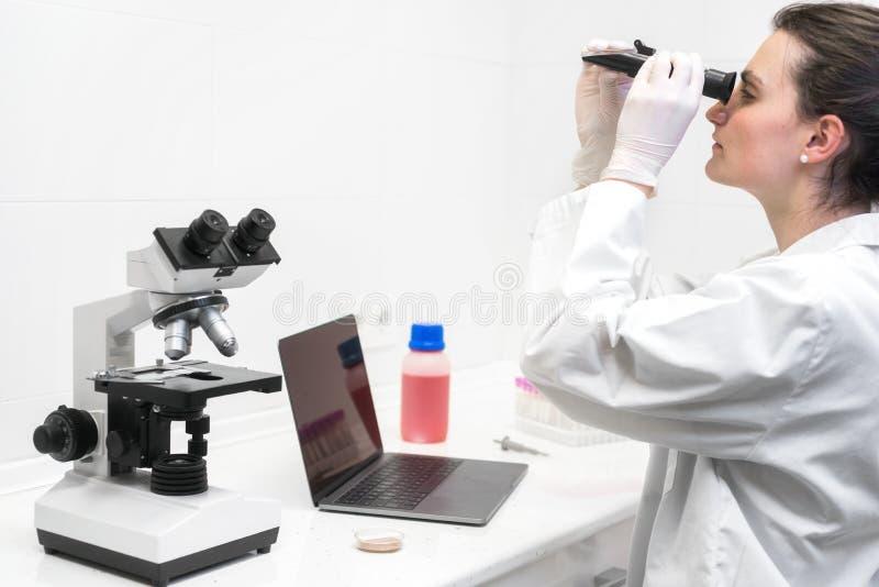 Técnico de laboratório judicial que estuda amostras com refractometer e microscópio, portátil na tabela, ciência forense fotos de stock